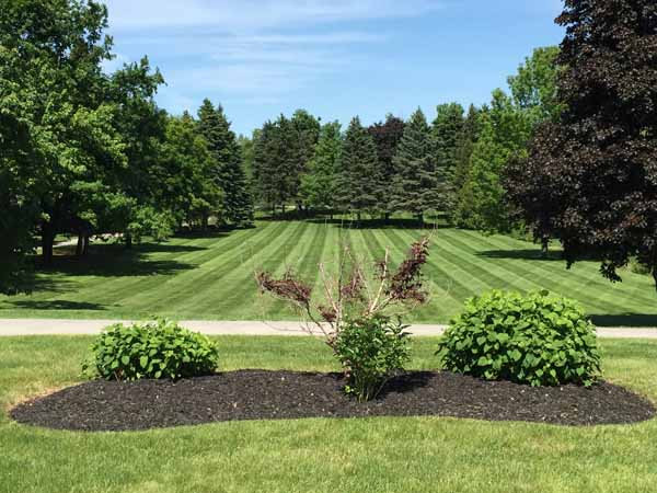 Lawn Care Services Burlington