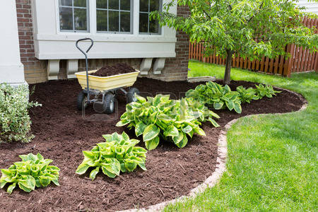 Planting and mulch Oakville